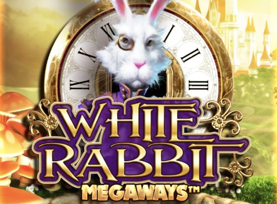 White Rabbitのビジュアル画像